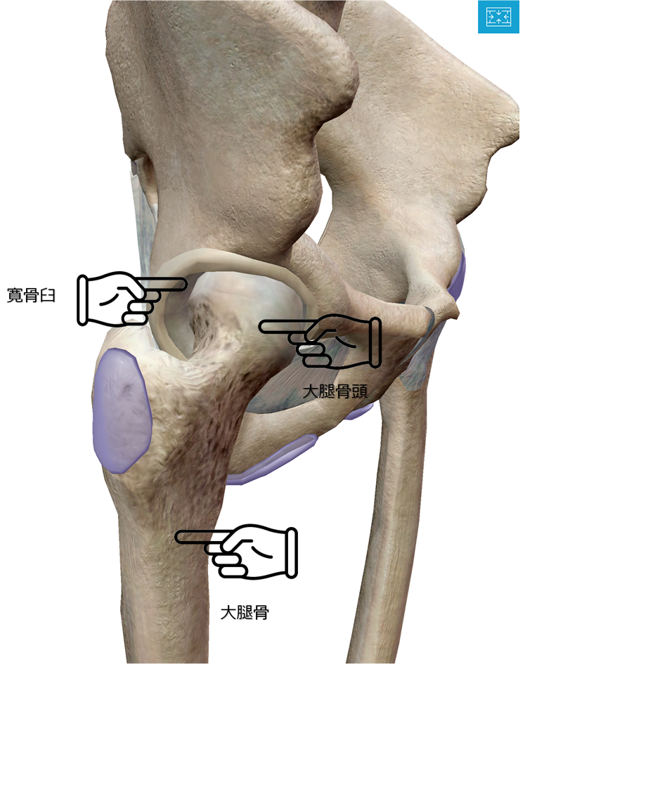 股関節 痛み 妊婦
